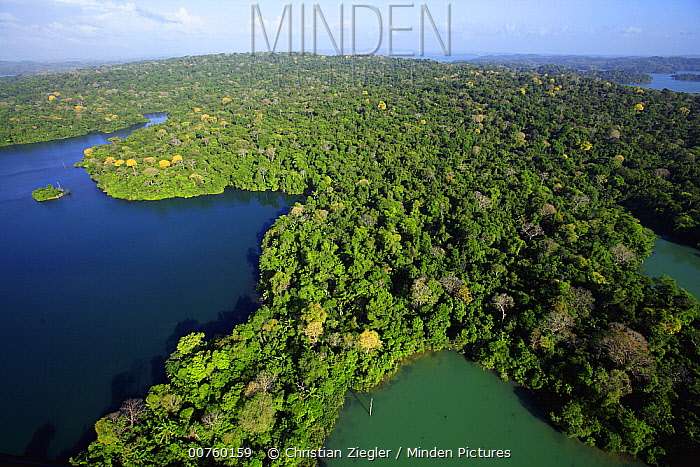 Aerial view of the Canal Zone, Barro Colorado Island, Research Station of the Smithsonian Tropical Research Institute, view of the 50 hectar permanent observation plotserumoc, Panama  -  Christian Ziegler