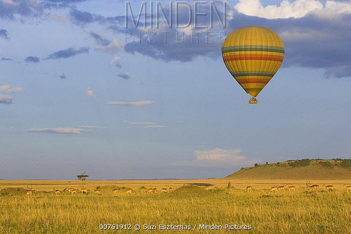 Hot air balloon flying over impala herd, Masai Mara Triangle, Kenya  -  Suzi Eszterhas
