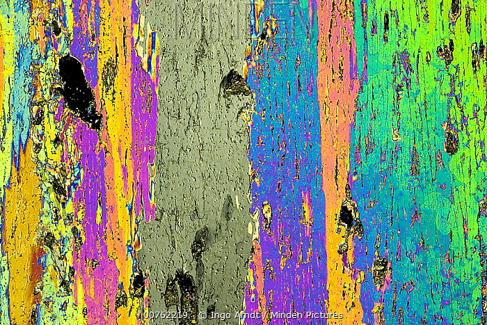 Sea ice core one millimeter thick photographed under polarized light, crystals frozen under turbulent water conditions, collected in Weddell Sea, Antarctica  -  Ingo Arndt