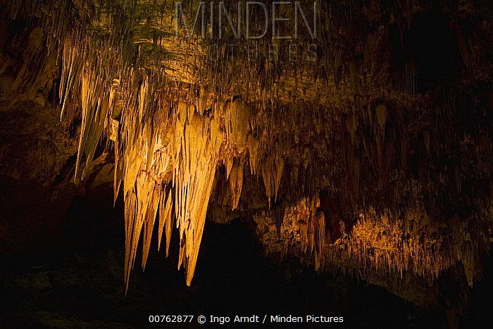 Stalactites, Carlsbad Caverns National Park, New Mexico  -  Ingo Arndt