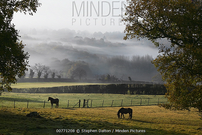 View towards the South Downs over Sussex Weald, England  -  Stephen Dalton