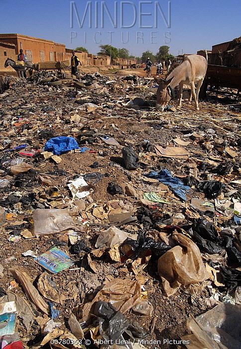 Donkey (Equus asinus) foraging among garbage strewn streets of Ouahigouya, Burkina Faso, west Africa  -  Albert Lleal