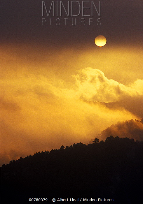 Morning fog over pine forest, Tarragona, Spain  -  Albert Lleal