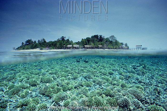 Sipadan Island, a rich oceanic island surrounded by coral reef, Borneo  -  Norbert Wu