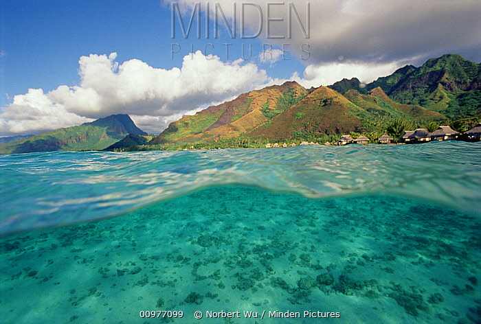 Shallow sand in Lagoon of Moorea, French Polynesia  -  Norbert Wu