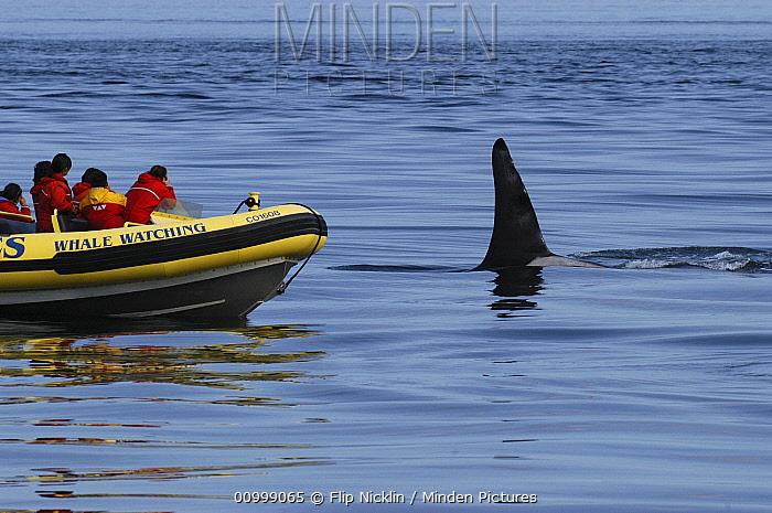 Orca (Orcinus orca) whale watching boat, southeast Alaska  -  Flip  Nicklin