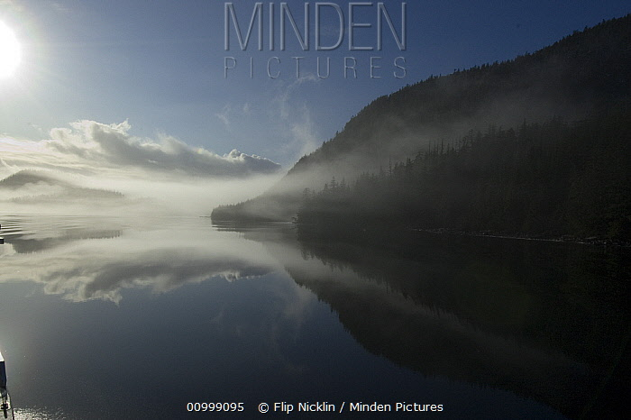 Calm bay with fog surrounded by boreal forest, southeast Alaska  -  Flip  Nicklin
