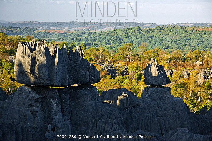 Tsingy rock formations and surrounding dry decidious forest, Tsingy de Bemaraha National Park, Mahajanga, Madagascar  -  Vincent Grafhorst