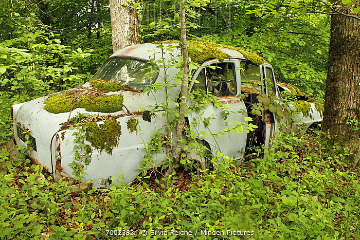 Old Simca Aronde car wreck in forest, Saint-Jory-las-Bloux, Dordogne, France  -  Silvia Reiche