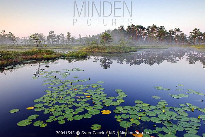 European Yellow Pondlily (Nuphar lutea), Tartumaa, Estonia  -  Sven Zacek/ NiS