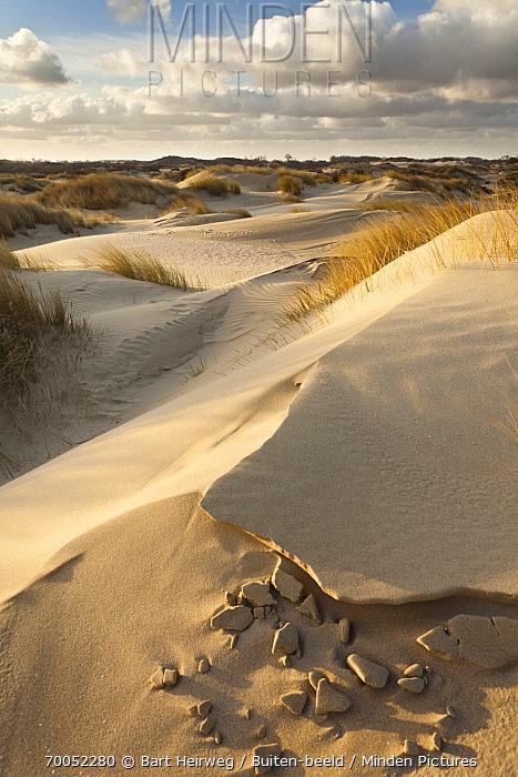 Coastal sand dunes, De Panne, Belgium  -  Bart Heirweg/ Buiten-beeld