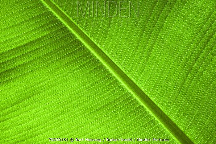 Leaf, Isle of Skye, Scotland, United Kingdom  -  Bart Heirweg/ Buiten-beeld