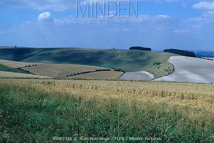 Britain, England View across fields, Downland,Devils Punch Bowl from the Ridgeway,Oxford  -  Joan Hutchings/ FLPA