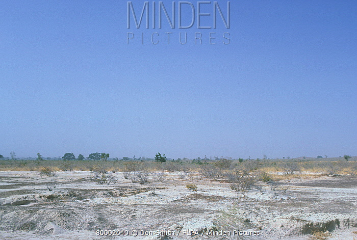 Nigeria, Sahel turning to desert from over grazing by cattle and goats  -  Don Smith/ FLPA