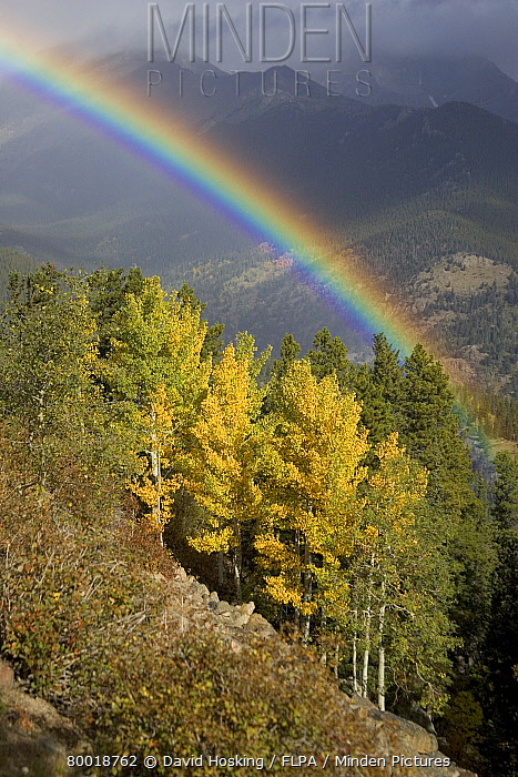Rainbow over aspen trees Rocky Mountain National Park  -  David Hosking/ FLPA