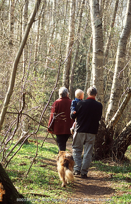 Man and woman with a small child walking along a woodland path in spring, man carrying baby  -  Nick Spurling/ FLPA