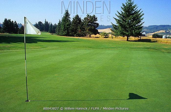 Golf course, putting green with flag, Oregon  -  Willem Harinck/ FLPA