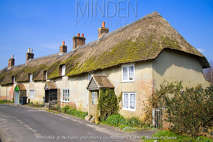 Row of thatched cob cottages in rural street, Moreton, Dorset, England, march  -  Nicholas and Sherry Lu Aldridge/