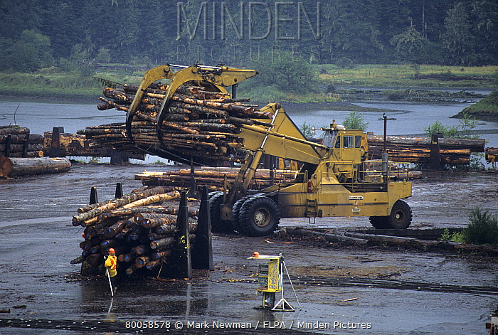 Forestry, machine moving logs, Beaver Cove, Vancover Isand, B.C., Canada  -  Mark Newman/ FLPA