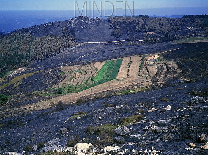 Farmland saved by fire break at Monchique, Portugal  -  David Hosking/ FLPA