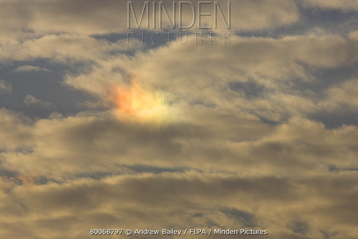 Mock Sun, or Parhelion (Sundog), sunlight on ice crystals, Welney, Cambridgeshire, England  -  Andrew Bailey/ FLPA