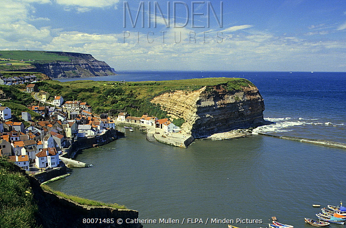 View of seaside village, harbour and cliffs, Staithes, North Yorkshire, England  -  Catherine Mullen/ FLPA