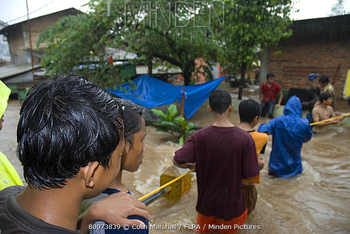 Flood victims, queuing to walk through fast-moving flood waters using rope, Pejaten, Jakarta, Java, Indonesia  -  Colin Marshall/ FLPA