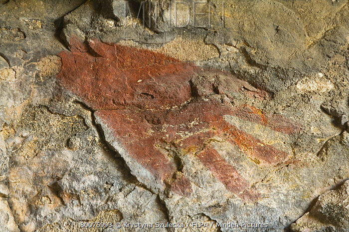 Aboriginal hand print, painted on rock of sandstone outlier, Bardedjilidji, East Alligator River, Northern Territory, Australia, september  -  Krystyna Szulecka/ FLPA
