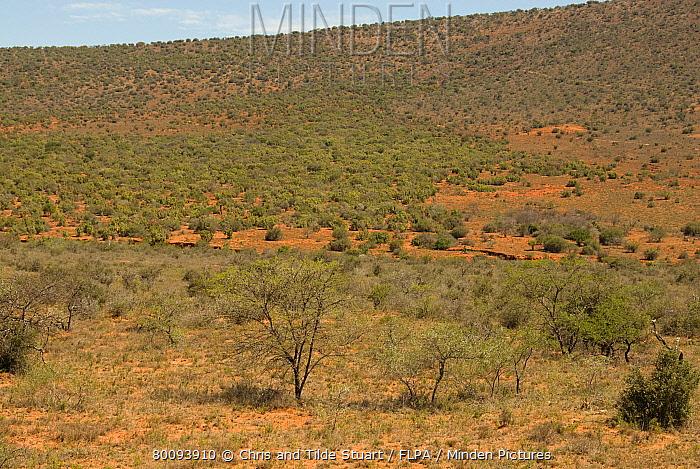 Overgrazed mixed thorntree and grassveld habitat, Cradock, Eastern Cape, South Africa  -  Chris & Tilde Stuart/ FLPA