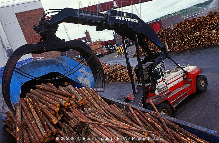 Logs loaded in pulp mill with Svetruck TMF forklift grapple, Sweden  -  Bjorn Ullhagen/ FLPA