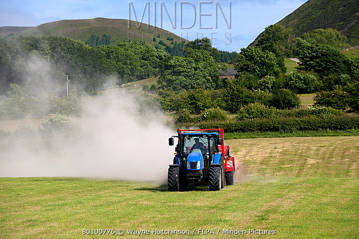 Tractor with muckspreader, spreading chicken manure mixed with lime on newly harvested meadow, England, june  -  Wayne Hutchinson/ FLPA