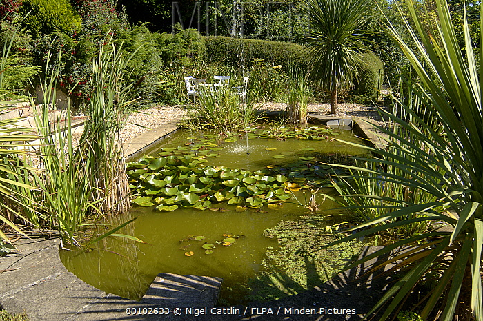 Minden pictures stock photos garden pond with gravel for Garden pond gravel
