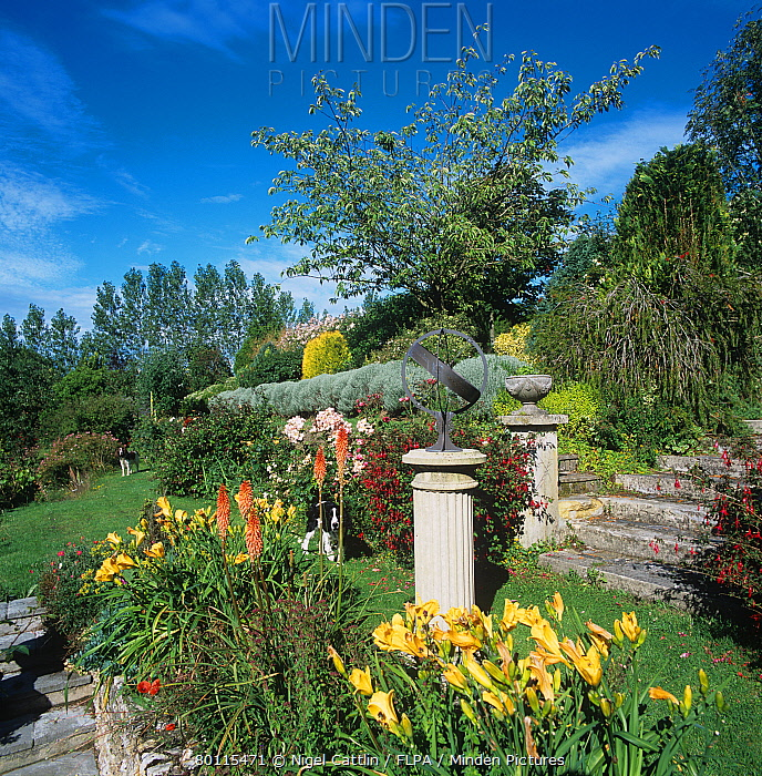 Flowers, steps & features in terraces in a sloping Devon garden in summer  -  Nigel Cattlin/ FLPA