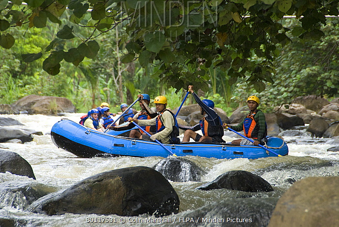 People wearing protective helmets and lifejackets, rafting down river rapids in dingys, Citarik River, West Java, Indonesia  -  Colin Marshall/ FLPA