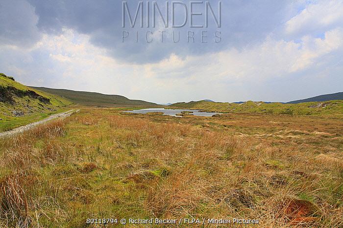 View of upland peat bog habitat, Llyn Pen-cor-maen, Ceredigion, Wales, june  -  Richard Becker/ FLPA