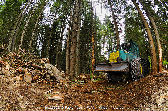 Timberjack c skidder, during logging in coniferous forest, Italian Alps, Italy, may  -  Fabio Pupin/ FLPA