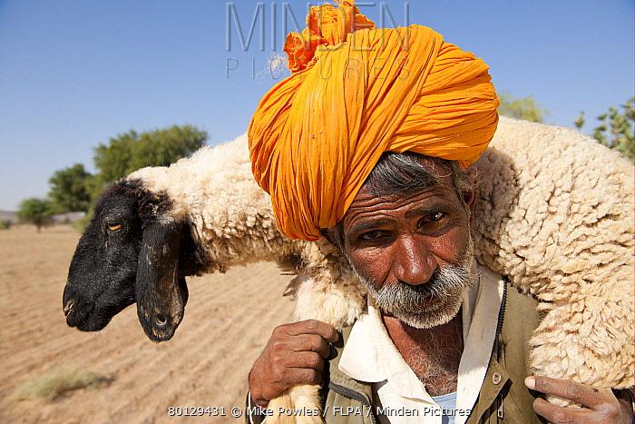 Bishnoi shepherd, close-up of head, carrying sheep on shoulders, Thar Desert, Rajasthan, India  -  Mike Powles/ FLPA