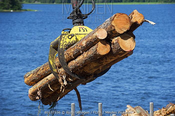 Grapple loading logs onto timber barge, Archipelago Sea, Baltic Sea, Sweden, june  -  Bjorn Ullhagen/ FLPA