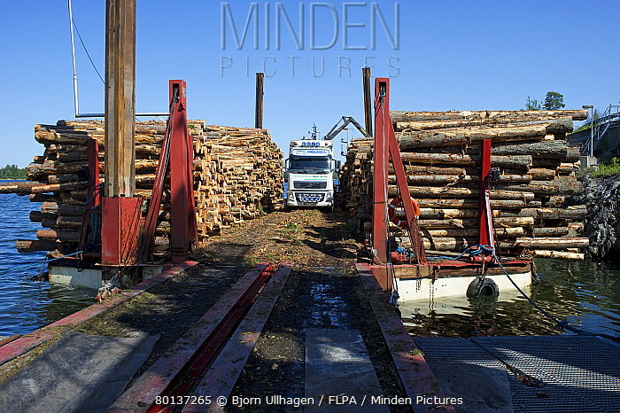Lorry with grapple loading logs onto timber barge, Archipelago Sea, Baltic Sea, Sweden, june  -  Bjorn Ullhagen/ FLPA