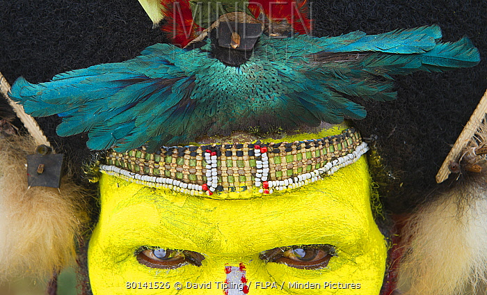 minden pictures stock photos huli wigman wearing traditional