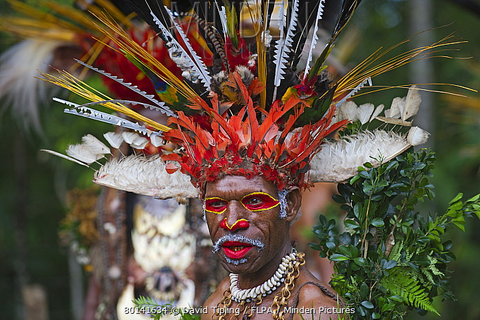 minden pictures stock photos juiwika tribesman from western
