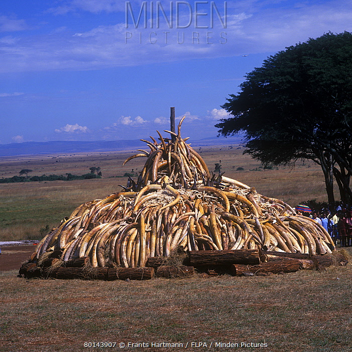 Horn Minden minden pictures stock photos products pile