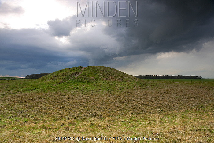 View of Bronze Age round barrow and approaching stormclouds, Normanton Down, Stonehenge, Salisbury Plain, Wiltshire, England, april  -  David Burton/ FLPA