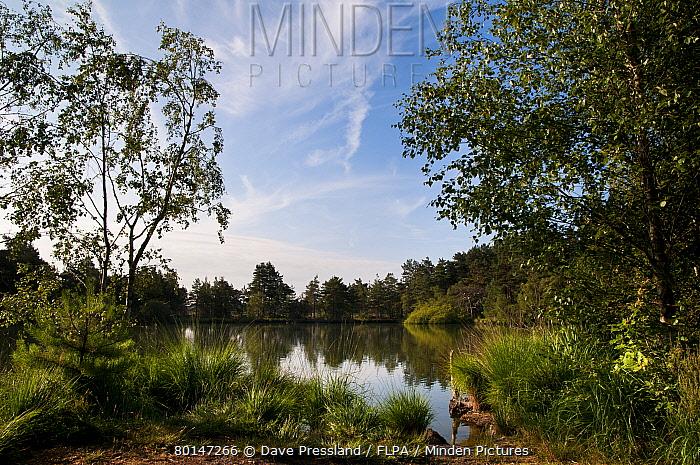 View of pond habitat, The Moat, Thursley Common National Nature Reserve, Surrey, England, july  -  Dave Pressland/ FLPA