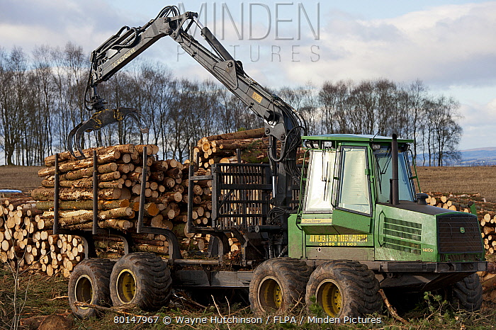 John Deere D Forwarder stacking felled timber from pine plantation, Stirlingshire, Scotland, february  -  Wayne Hutchinson/ FLPA