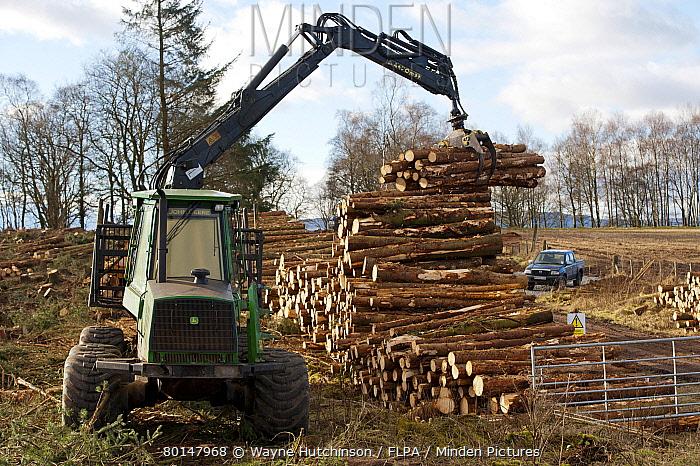 John Deere D Forwarder stacking felled timber from pine plantation, Stirlingshire, Scotland, february  -  Wayne Hutchinson/ FLPA