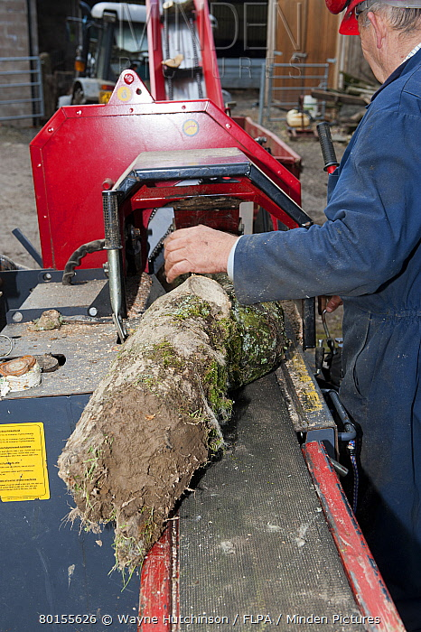 Forestry worker loading timber onto logging and splitter bench, Cumbria, England, May  -  Wayne Hutchinson/ FLPA
