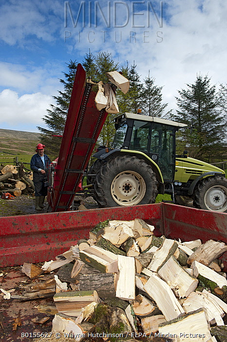 Stack of firewood coming from tractor powered sawbench and splitter, Cumbria, England, May  -  Wayne Hutchinson/ FLPA