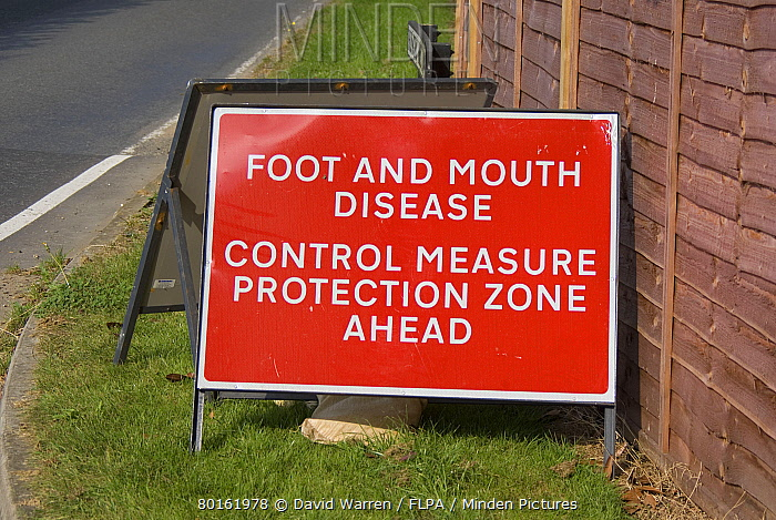 Foot And Mouth Disease, Control Measure Protection Zone Ahead' sign at roadside, Surrey, England, September  -  David Warren/ FLPA