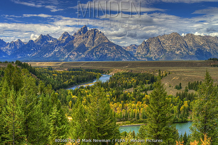 View of forested river valley and distant mountain range, Grand Tetons, Grand Teton National Park, Rocky Mountains, Wyoming, U.S.A., September  -  Mark Newman/ FLPA